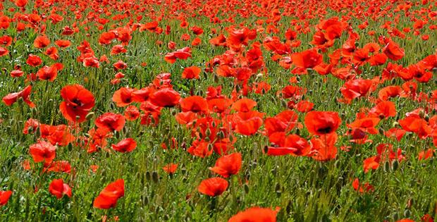 Remembrance day library resource guide...