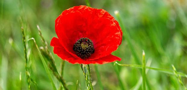 Closed Sunday, Nov. 11 & Monday, Nov. 12 for Remembrance Day...
